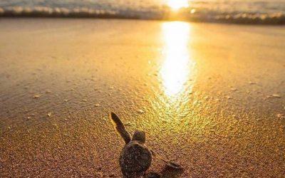 Un challenge pour impliquer les citoyens pour la sauvegarde des océans et des tortues – Juin 2018