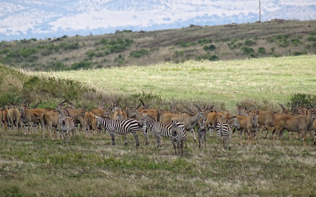 WEGS, HISA, ELT, Kilimanjaro Animal Crew, déterminées à sauver les animaux de Tanzanie !