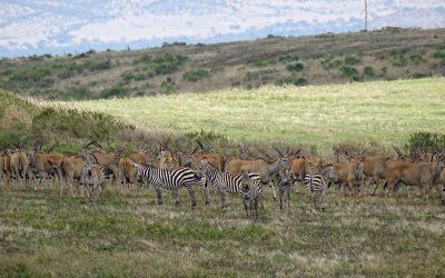 WEGS, HISA, ELT, Kilimanjaro Animal Crew, determined to save animals from Tanzania!